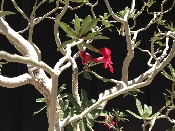 http://stores.sellmojo.com/images/inspiration/flower on tree24753.jpg